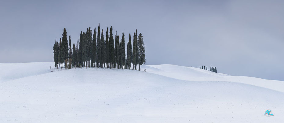 Die bekannte Zypressengruppe, im absolut ungewohnten verschneiten Anblick