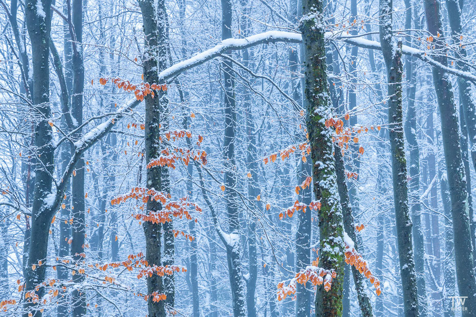 Auch durch den Schnee blitzten Farben auf (B1582)