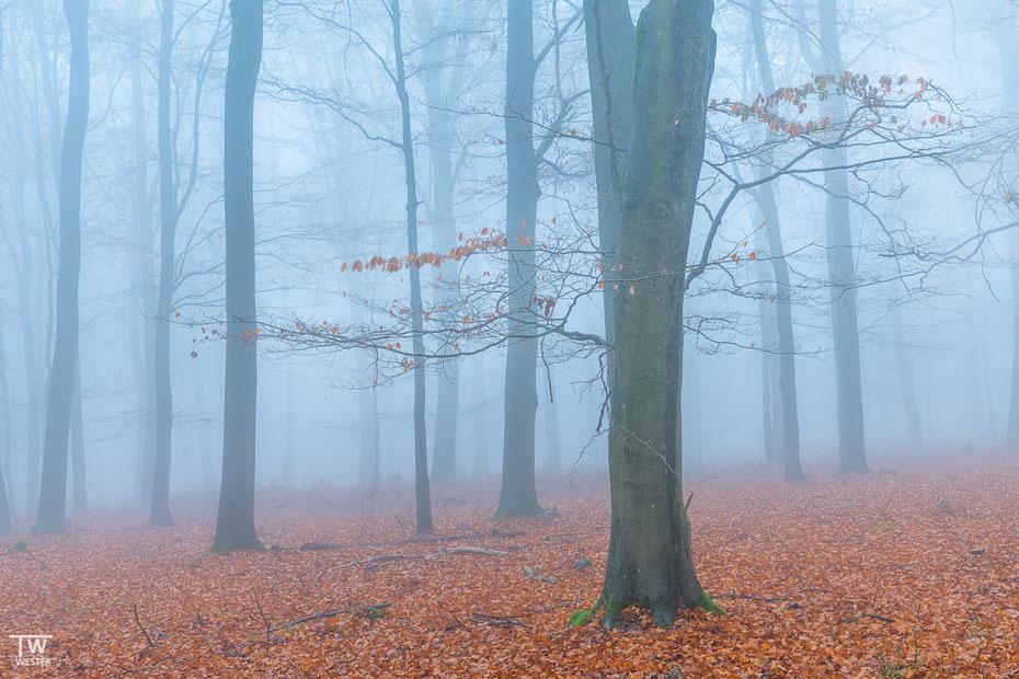 """Am """"Wilden Kermeter"""" hatten wir an einem Sonntagmorgen schöne Nebelstimmungen (B1589)"""