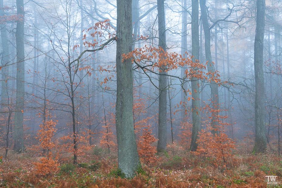 Mitten im Nationalpark Eifel (B1584)