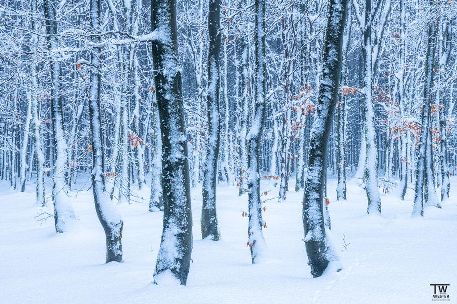 Mit Frost überzogen (B1578)