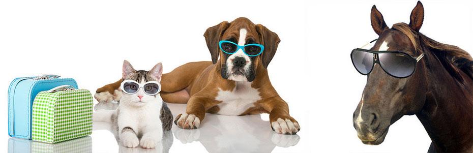 Rencontre chien et chat