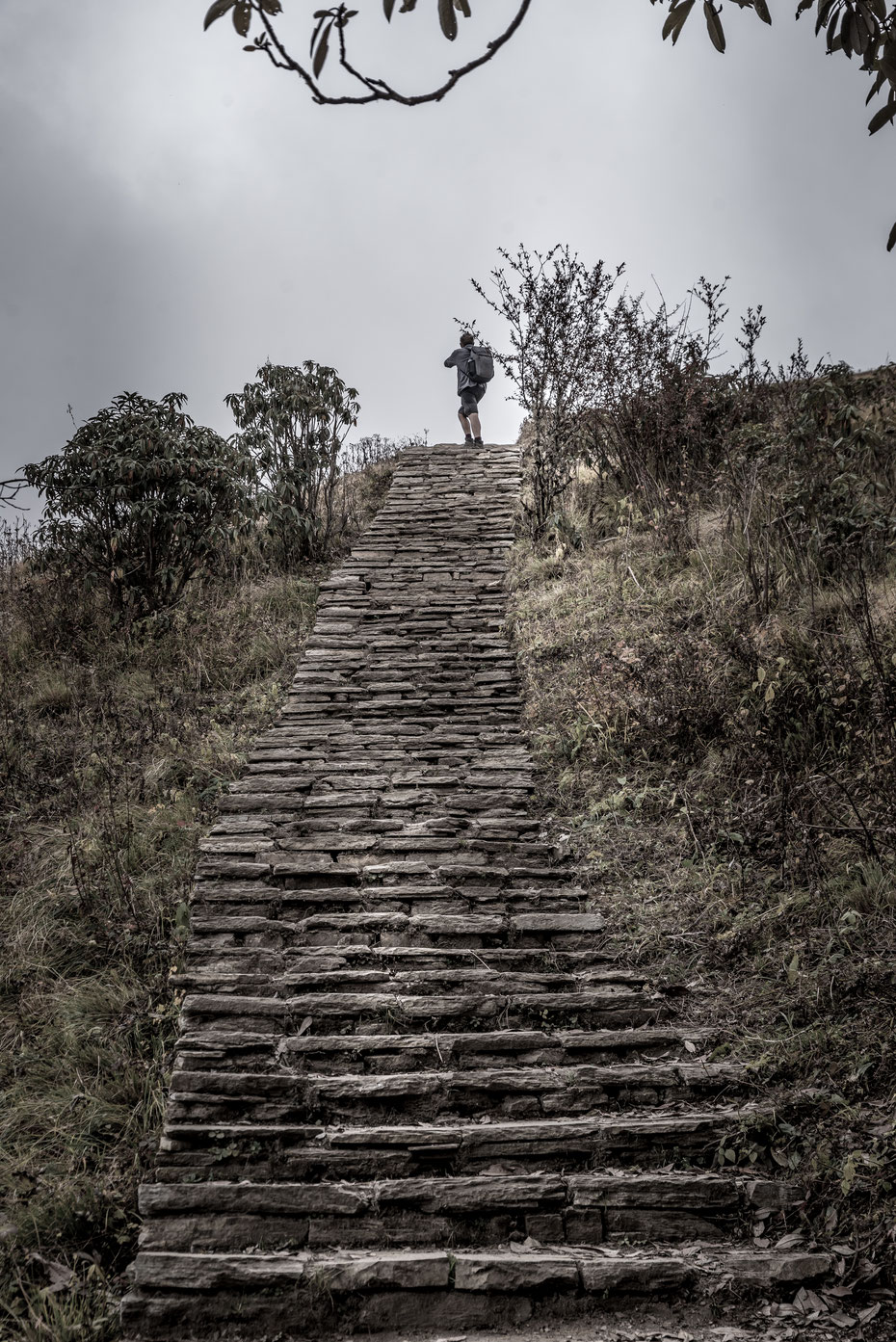 immer nach oben! Um die Wege gegen Erosion zu schützen werden in Nepal tausende Treppen angelegt... Die Wadenmuskulatur freut sich!  Etwa 22.000 haben wir auf- und abwärts bezwungen!