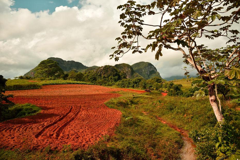 Auf dem Pferd lässt sich das Vinales Tal gut erkunden. Auf den roten Feldern wächst Tabak, nach der Regenzeit ist alles grün und bietet nicht nur den Photographen tolle Motive. Ein kurzer Regenschauer erfrischt uns am Nachmittag.