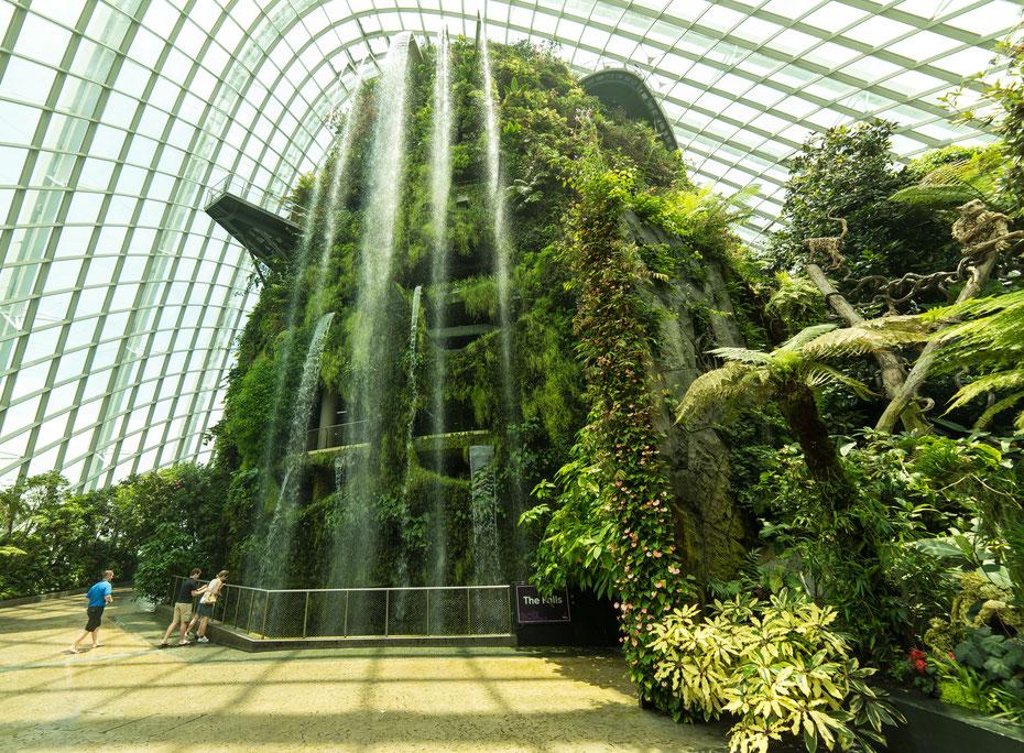 Gardens by the Bay - in den beiden größten Gewächshäusern der Welt werden Pflanzen aus aller Welt ausgestellt. Auch das Klima ist den Pflanzen angepasst. Vom Wüstenklima bis zur tropischen Hitze im Rainforrest Gewächshaus.