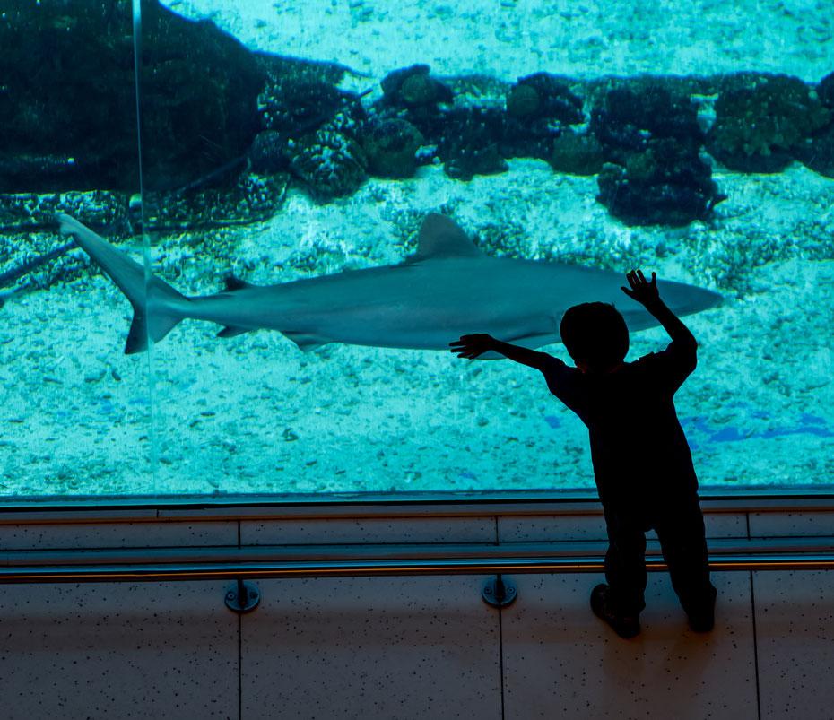 Dubai Mall - es gibt hier nichts was es nicht gibt! Eine Eislaufbahn, zahllose Geschäfte und ein Aquarium mit Haien und Mantas. Hier zeigt sich der Größenwahn der Scheichs. Alles muss größer, bunter, besser sein  ohne Rücksicht auf Verluste.