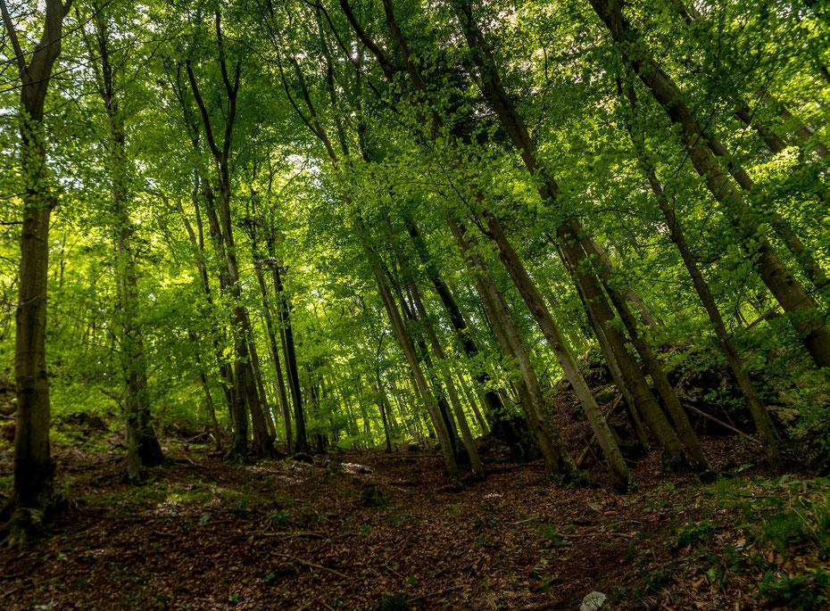 Wenn ich Slowenien eine Farbe zuordnen müsste, wäre es vermutlich grün. Allerdings in sämtlichen Ausprägungen der Farbpalette!