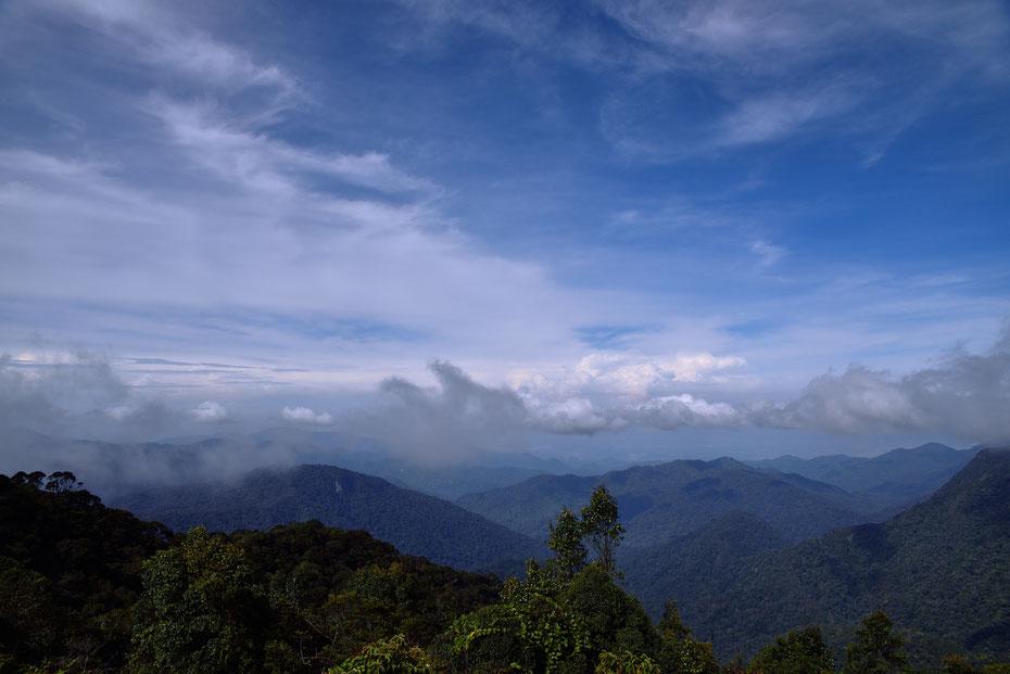 Trotz der Höhe von 2.000 Metern war es in den Cameron Highlands angenehm warm. Die Wanderwege sind hervorragend ausgebaut und beschildert, auch für ungeübte Wanderer durchaus schaffbar.