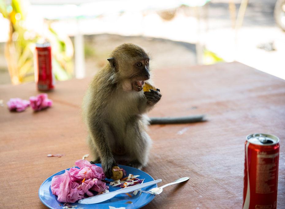 Am Monkey Beach im Penang Nationalpark (Taman Negara Pulau Penang) muss man jederzeit auf sein Essen aufpassen, sonst kommen diese frechen Jungs und holen sich ihren Teil vom Nachtisch. Dreiste Nummer!