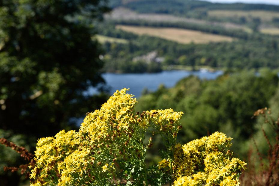 Und da sagt nochmal jemand, in Schottland regnet es dauernd. Sonne pur im September am Loch Lomond.