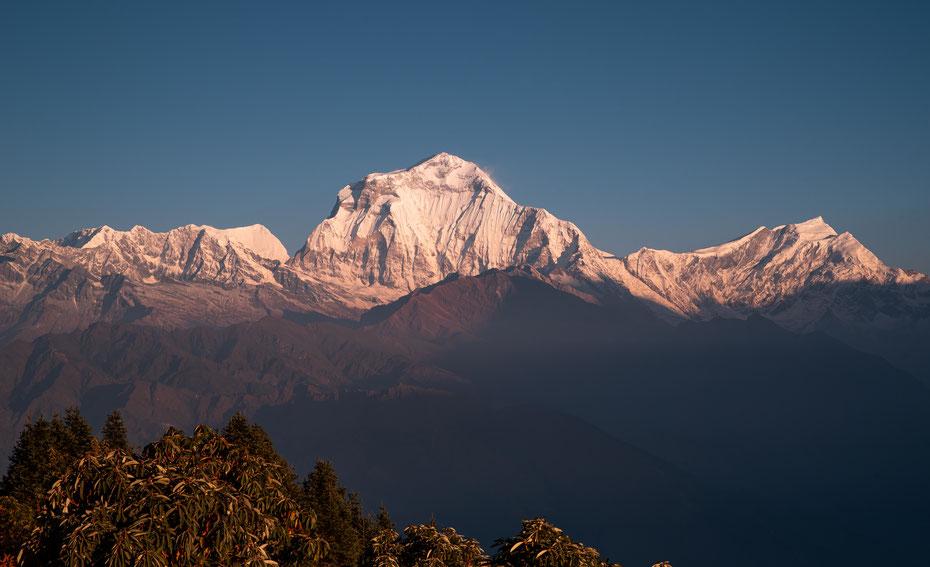 Dhaulagiri I im morgendlichen Licht. Der siebthöchste Berg der Welt (8.167 Meter) war der erste entdeckte Achttausender und fast 30 Jahre lang der höchste bekannte Berg der Welt!
