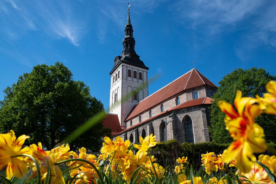 Die Niguliste Kirik im schönsten Sommergewand. Ein echter Hingucker auf dem Altstadtspaziergang!