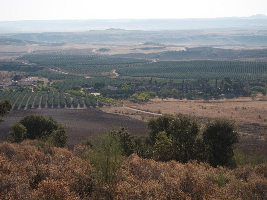 EXTRASCAPE kürte ihn zum schönsten der Welt - den Olivenhain von Casas de Hualdo in El Carpio de Tajo