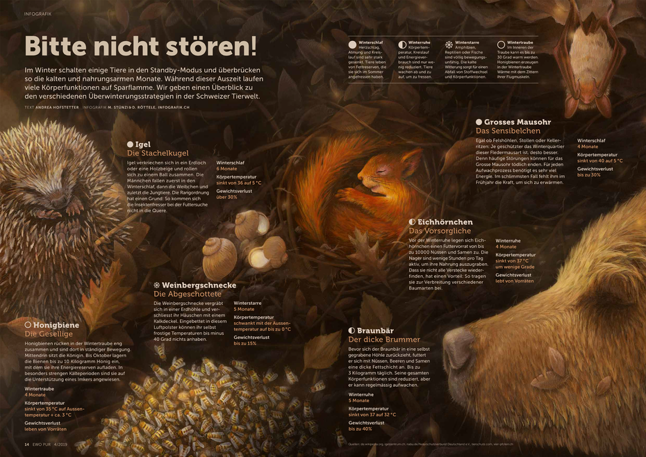 Infografik Tiere im Winterschlaf - Igel, Weinbergschnecke, Honigbiene, Grosses Mausohr, Eichhörnchen, Braunbär © Michael Stünzi