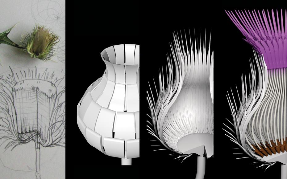Gemeine Kratzdistel: Von der Skizze zur 3D Visualisierung Entwürfe © Michael Stünzi