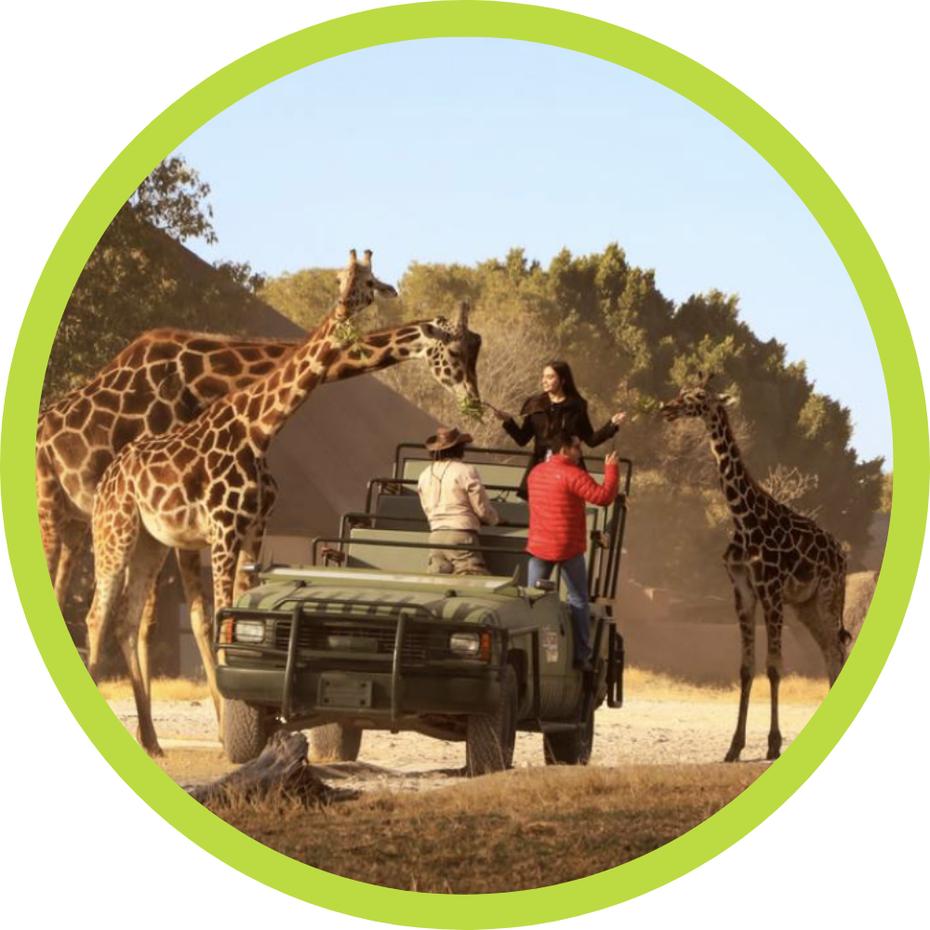 Tours de CDMX a Africam Safari