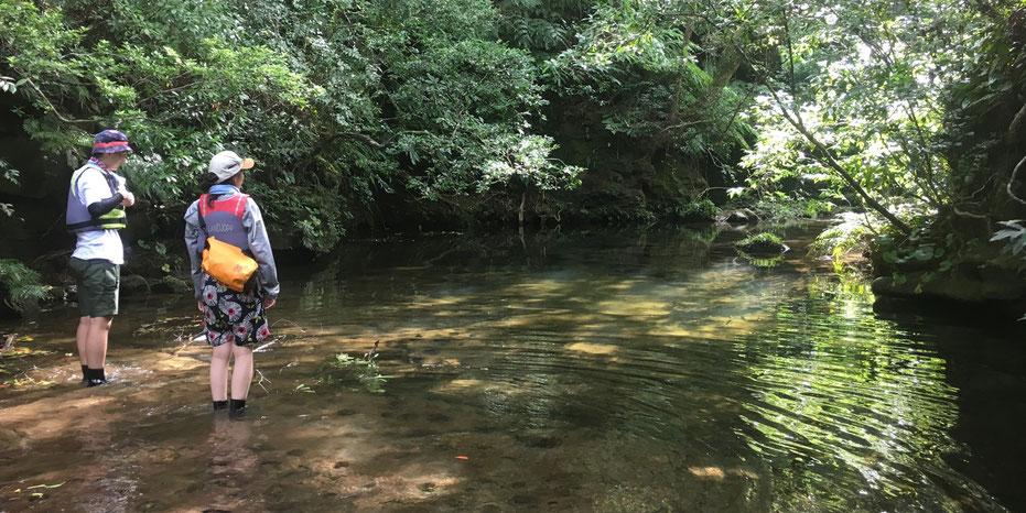西表島・ガイドにおまかせツアー【マングローブカヌー&沢遊び】