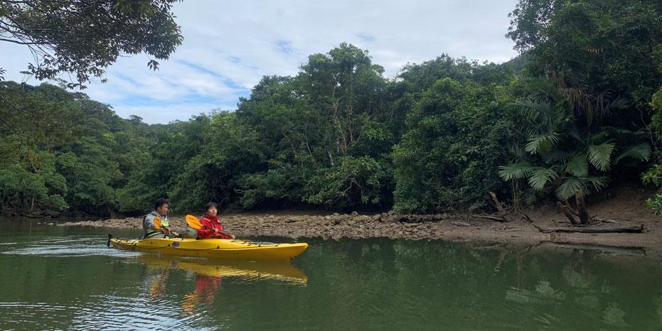 西表島・ガイドにおまかせツアー【どんぐり+滝遊び&マングローブカヌー】