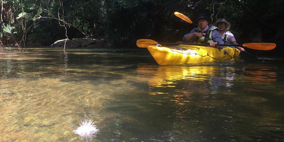 シイラ川/サガリバナ