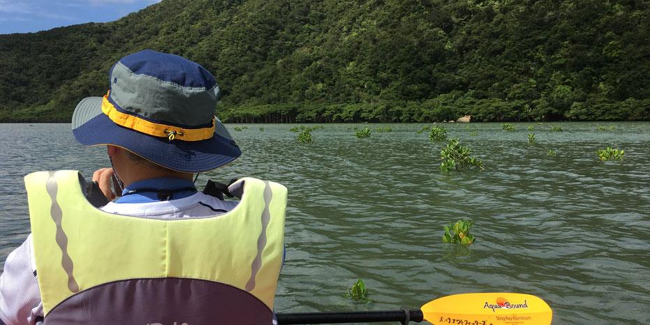 西表島・ガイドにおまかせツアー【マングローブカヌー&ジャングルトレック:ナーラの滝】