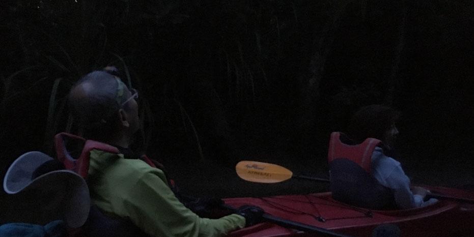 西表島・早朝カヌー/カヤックツアー【月夜カヌー】おまけ*サガリバナ*