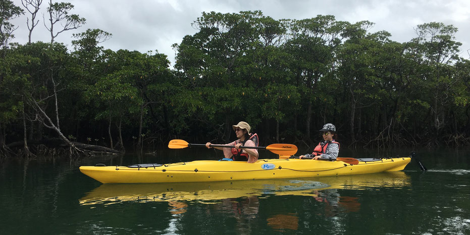 西表島・ガイドにおまかせツアー【マングローブカヌー&自然散策トレイル(サシバの渡り)】