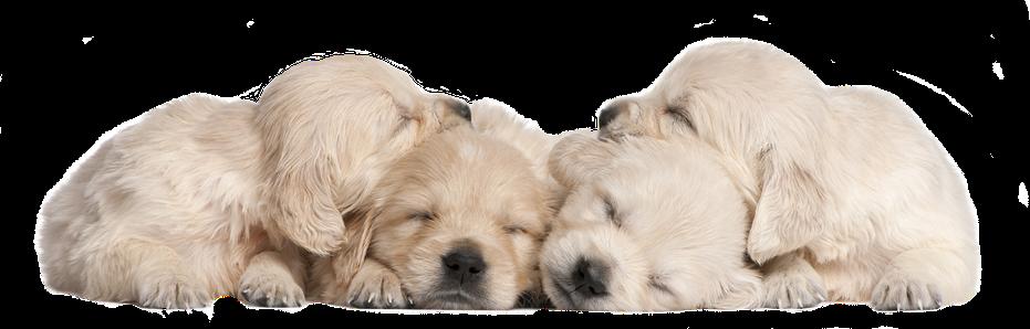 Hundeschule Bremen - Ihre Hundeschule MOMO in Bremen - Kontakt