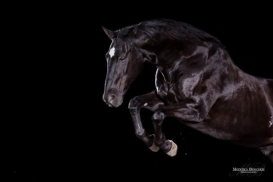 Pferde im Studio, Freisprung