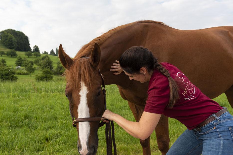 Osteopathie.für.Pferde.Baselland.Pferdeosteopathie