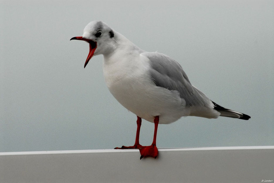 Oiseaux 2009_001ED