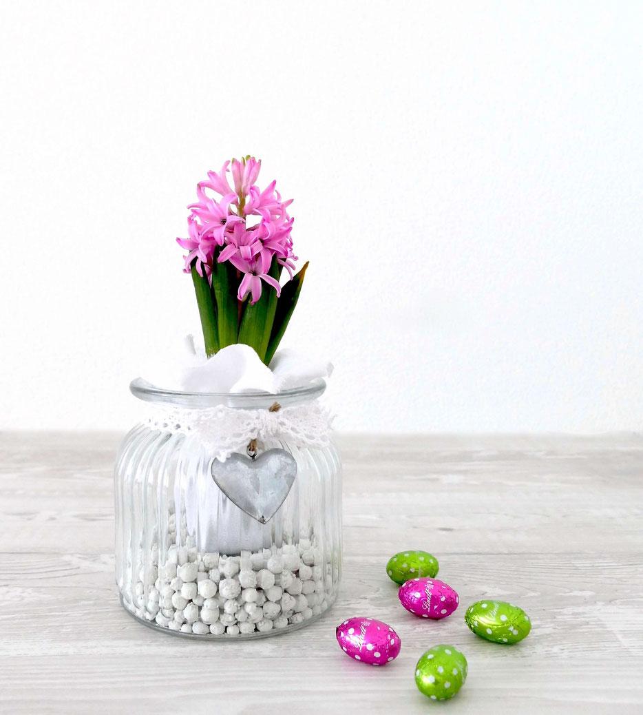 Rosa Hyazinthe im Glas dekoriert