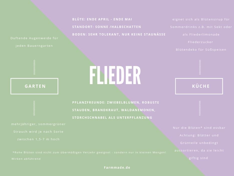 Flieder giftig