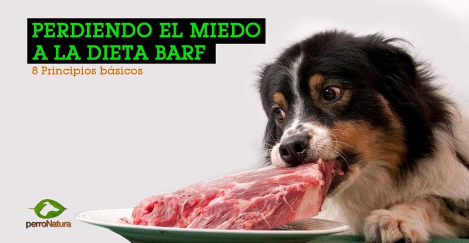 perro comiendo dieta BARF