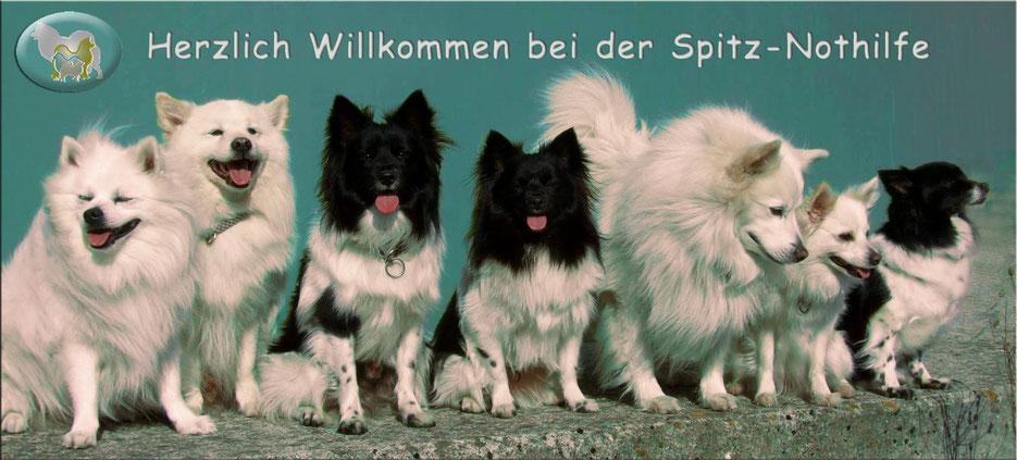 www.spitz-nothilfe.de