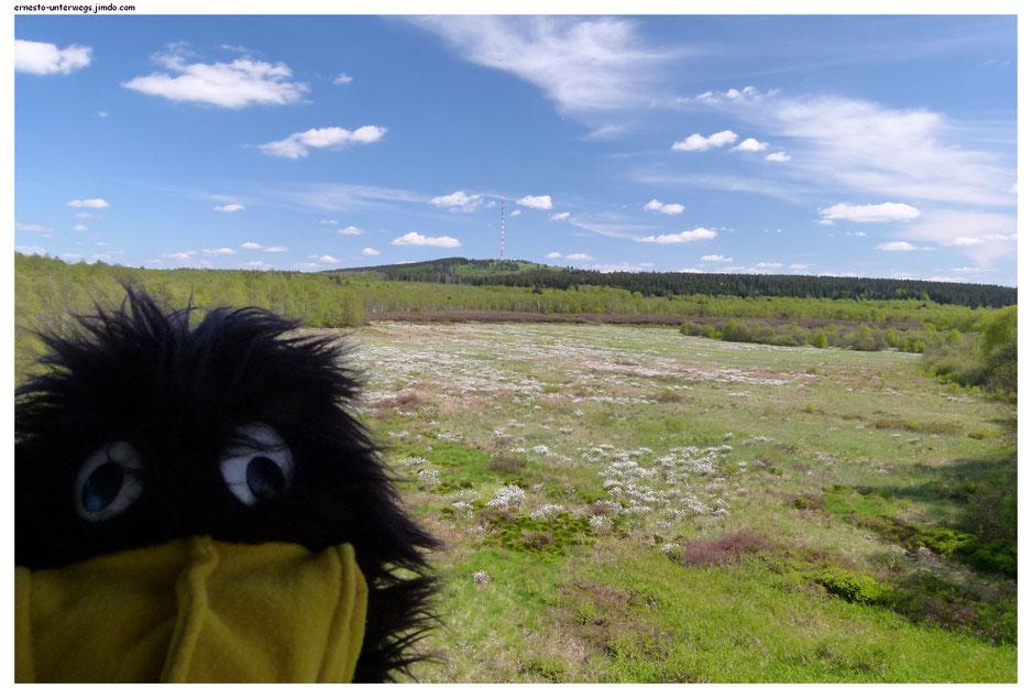 Blick über das Rote Moor auf den Heidelstein