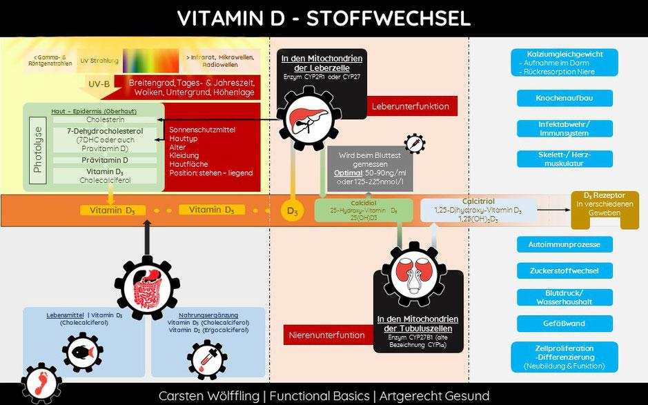 Wie wirkt Vitamin D?