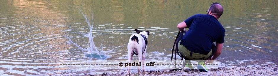 Wasser See Fluss fließend Natur Outdoor Naturfotographie sylvenstein bodeguero hund spielen