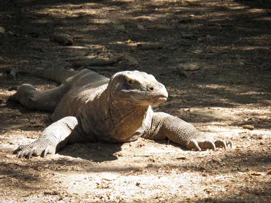 Komodo: l'isola dei draghi
