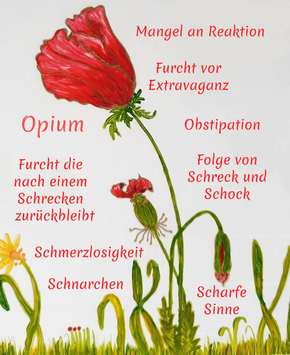 Homöopathische Symptome von Opium