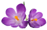 Fleurs de Bach offertes