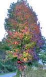 好きな風景:虹色のポプラ