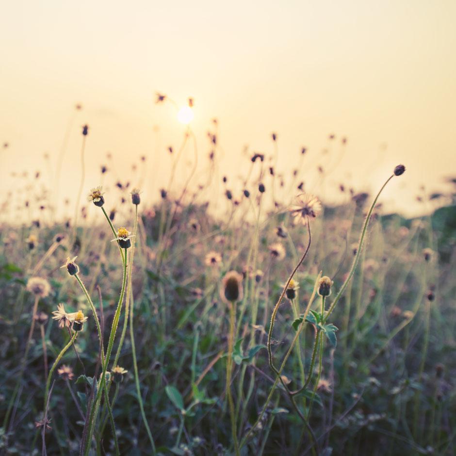 Naturwiese steht für Nachhaltigkeit & Ökologie wie Berg-Schwedenhaus