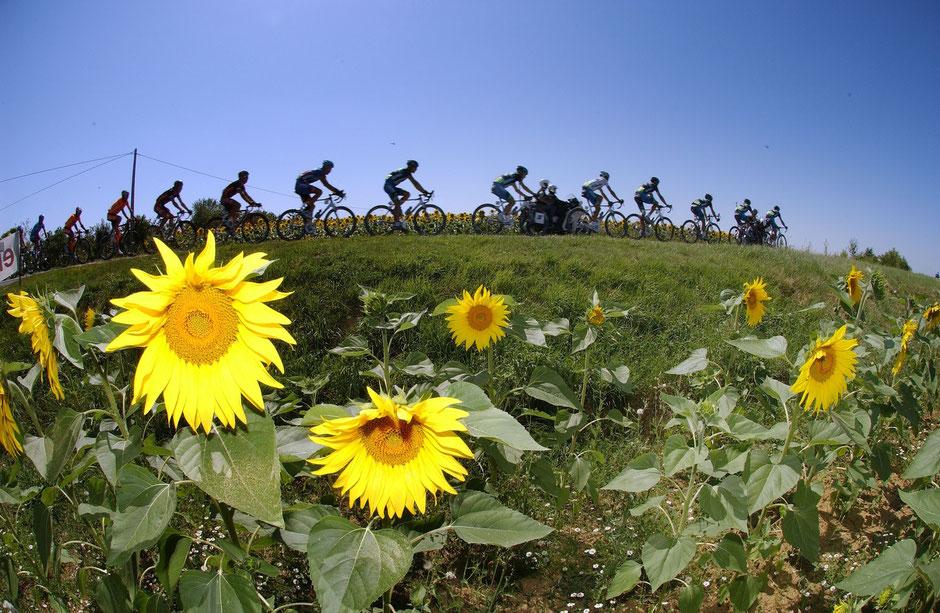 Fahrerfeld-Tour de France 2007- 17. Etappe Pau-Castelsarrasin.