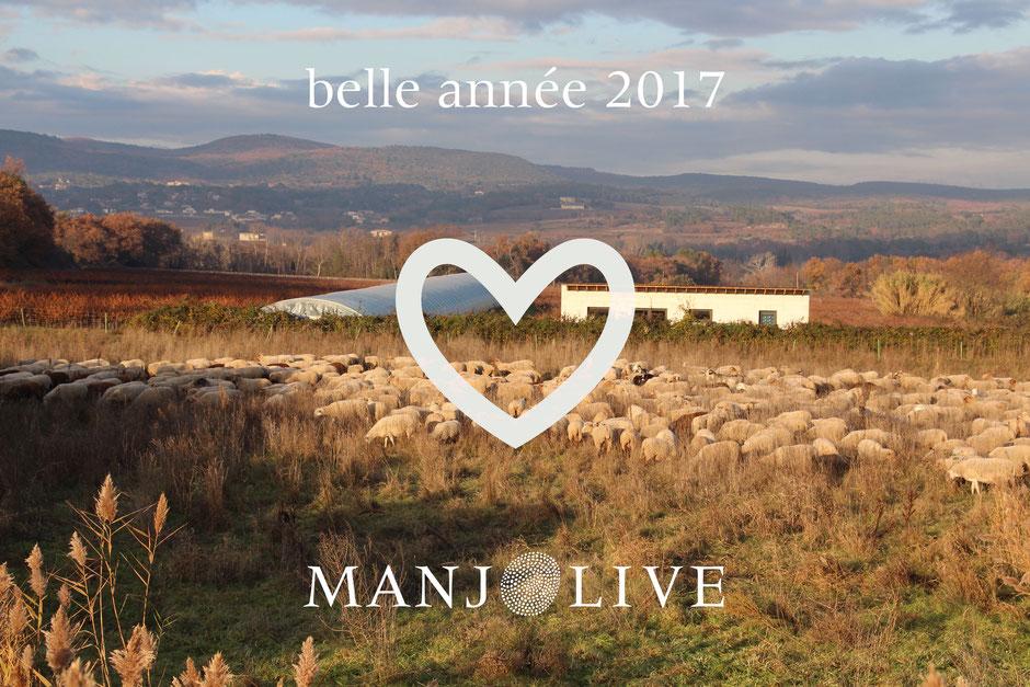 Photo moutons - Belle année 2017 - Manjolive