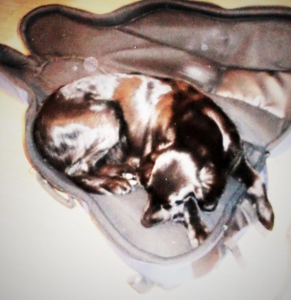 Da liegt mein Hund, wo sonst das Cello hingehört! Etwas Neues ausprobieren? Why not?