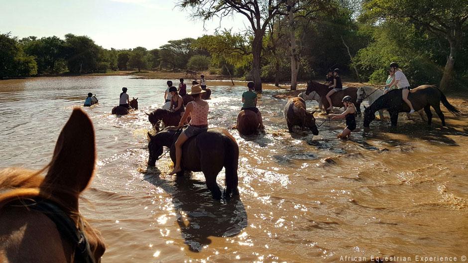 Paarden in het water afkoelen in Zuid-Afrika