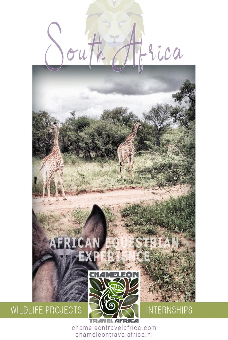 Vrijwilliger, stage, natuur, zuidafrika, wildedieren