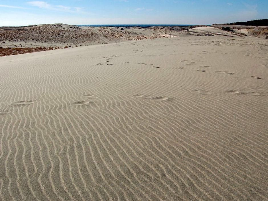 美しい風紋の砂丘を歩く。奥には遠州灘(太平洋)の水平線が覗いていた