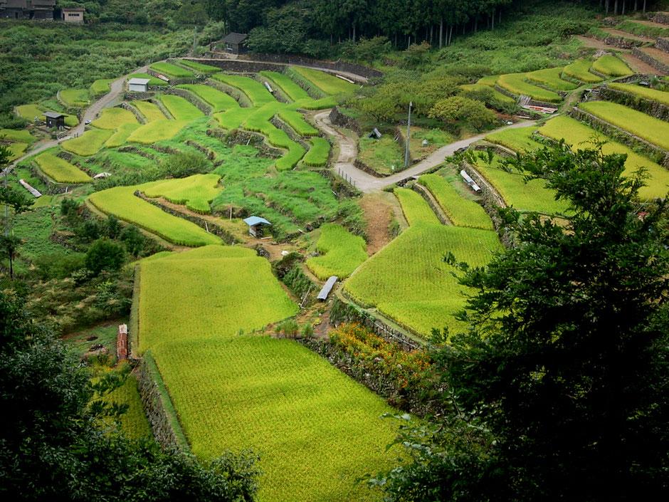 村人が大変な苦労をして作り上げた千枚田。展望台に向かう山道から