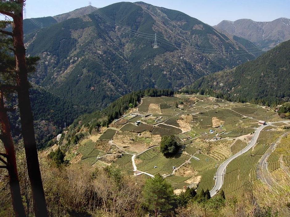 緑の縞模様が美しい天空の茶畑。最近話題の絶景スポットからの眺め